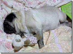 おやすみなさいzzz